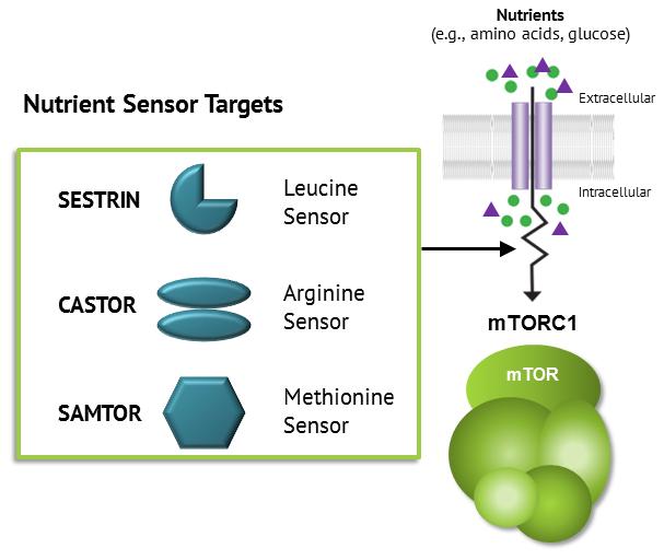 Drug Discovery Platform – Navitor Pharmaceuticals, Inc